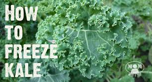 how to freeze kale mom with a prep