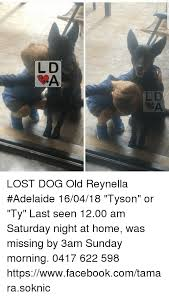Saturday Memes 18 - l d oa lost dog old reynella adelaide 160418 tyson or ty last seen