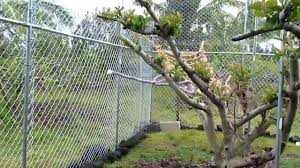 macaw aviary without macaws youtube