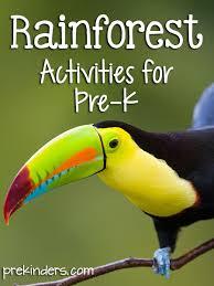 rainforest theme prekinders