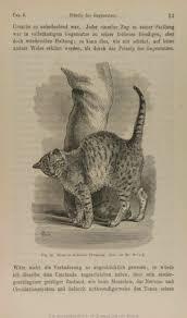 darwin c r 1877 der ausdruck der gemüthsbewegungen bei dem