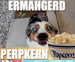 Ermahgerd Animal Memes - list of synonyms and antonyms of the word ermahgerd animals