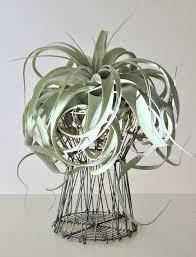 Air Plants Sculptural Air Plants U2014 Flourish