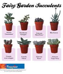 Pinterest Fairy Gardens Ideas by Fairy Gardening Fruit Basket Flowerland Succulents