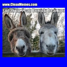 Funny Donkey Memes - clean funny images clean memes the best the most online page 174