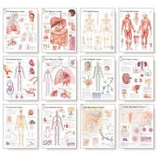 body systems chart real fitness