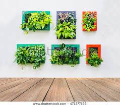 vertical garden on white brick wall stock photo 235849954