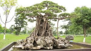 the story of an tree news vietnamnet