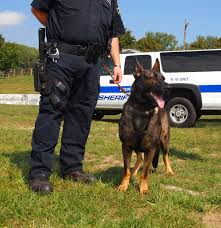 belgian malinois vest k 9 powers on display at police dog trials in nj news