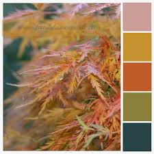 Fall Color Palette by Fall Palette Images Reverse Search