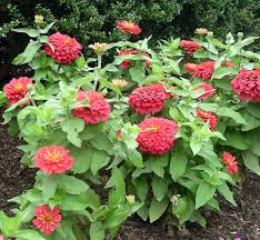 september ornamental plant tips university of maryland extension