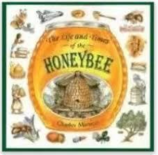 bee life cycle worksheets mamas learning corner