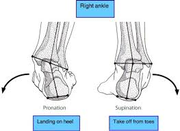 Subtalar Joint Fracture Ankle Joint Pain Case File Covers A Runner U0027s Acute Injury