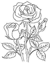 imagenes para colorear rosas rosas para colorear para imagenes de santa rosa para colorear