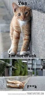 Best Animal Memes - top 30 funny animal memes and quotes quotes and humor