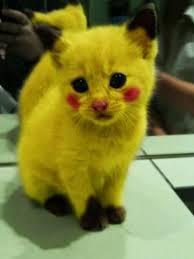 Kitten Halloween Costumes Pet Modern Ideas Creative Color Design Stylish Pets Grooming