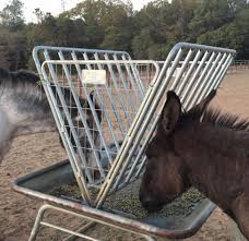 How To Get Wildfire Cases Fast by 72 Horses Survive Two Wildfire Close Calls Rescue Center Receives
