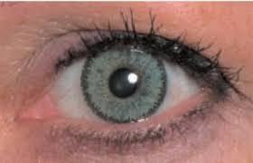 Light Brown Contact Lenses Item Xl 9575618 10914641 Jpg