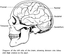 Coloring Brain Coloring Pages Brain Coloring Page