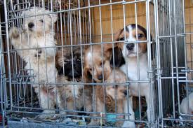 hsus u0027 idea of progress in animal protection laws falls short of