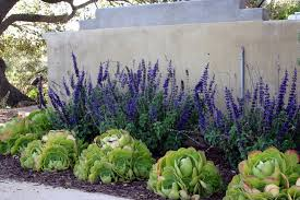 Drought Tolerant Landscaping Ideas Drought Tolerant Landscaping Landscape Contemporary With Mass