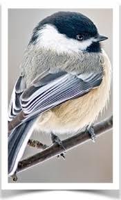 The Backyard Bird Company - the finch farm birds for sale bird supplies pet finches for sale