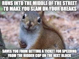 Squirrel Meme - good guy squirrel meme guy