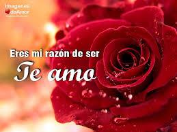 bonitas de rosas rojas con frases de amor imagenes de amor facebook 10 imágenes de rosas hermosas para decir te amo