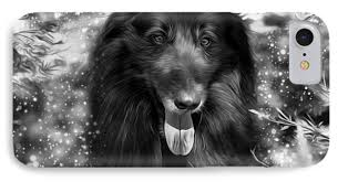 belgian sheepdog art belgian sheepdog art photograph by wolf shadow photography