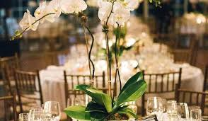 orchid centerpieces potted orchid centerpieces for weddings nonsensical orchid
