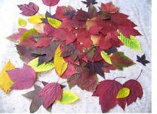 fall wedding decorations fall wedding decorations ebay