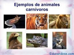imagenes de animales carnivoros para imprimir animales carnívoros lista y ejemplos educándose en linea