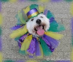 mardi gras dog barking from the bayou