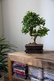 indoor plants for home greenery nyc
