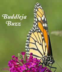 223 best butterfly garden plants images on pinterest monarch