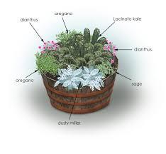 Herb Container Gardening Ideas Kale Flowers Herbs Container Garden Bonnie Plants