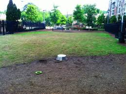 unleash the hounds these are atlanta u0027s top 10 dog parks