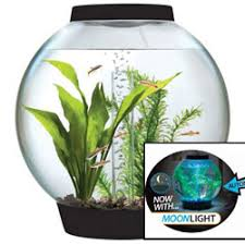 Beta Fish In Vase How To Choose The Right Betta Fish Tanks Earth U0027s Friends