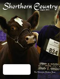 shorthorn country august 2014 issue by sci stephanie cronin