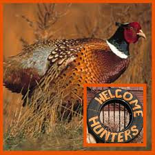 state bird of south dakota premier pheasant hunting visit mitchell