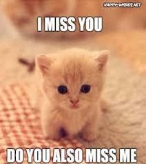 Miss You Memes - i miss you meme cat mne vse pohuj