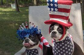 Wisconsin traveling with pets images 6 memorial day travel tips dog cat and other pet friendly travel jpg