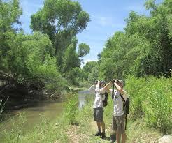 Arizona wildlife tours images Southeast arizona birding festival august in arizona top jpg