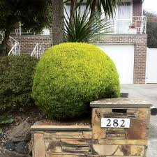 105 best poodle trees images on poodle garden and