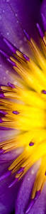 Purple And Orange Color Scheme Amazing Purple And Yellow Bloom Colour Scheme Pinterest