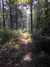 Louisiana forest images Best hike in louisiana wild azalea trail kisatchie national forest jpg