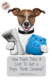 how much does it cost to get a dog u0027s teeth cleaned