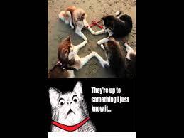 Lol Funny Meme - lol funny meme youtube