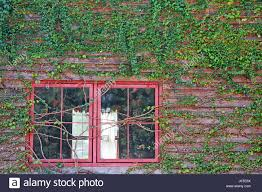 ornamental climbing plants on wooden with window