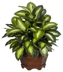 artificial plants nearly golden dieffenbachia silk plant green traditional
